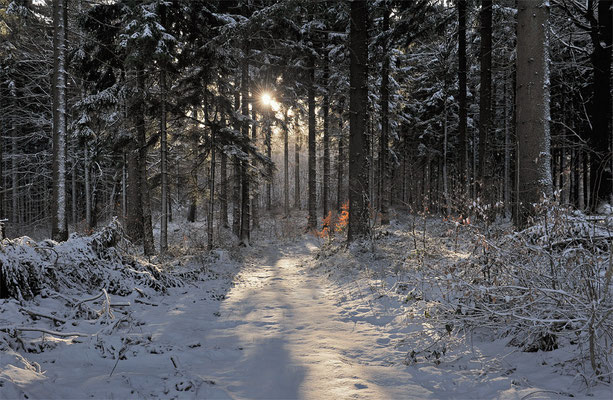Pünktlich zum meteorologischen Frühlingsanfang kam der Winter im Jahr 2015 zurück. Wie hier im Ungerwald gab es rund um Neustadt eine frisch verzuckerte Schneelandschaft, ISO 400, BW 35mm, F/11.0, 1/50sek. 02.03.2015.