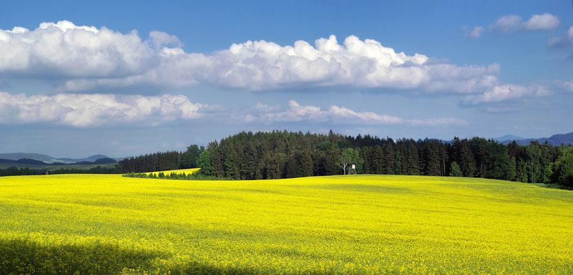 Rapsfelder in voller Blüte bei Ulbersdorf. Panorama aus 3 Aufnahmen. ISO 100, 18mm, f/8.0, 1/160sek., Polfilter