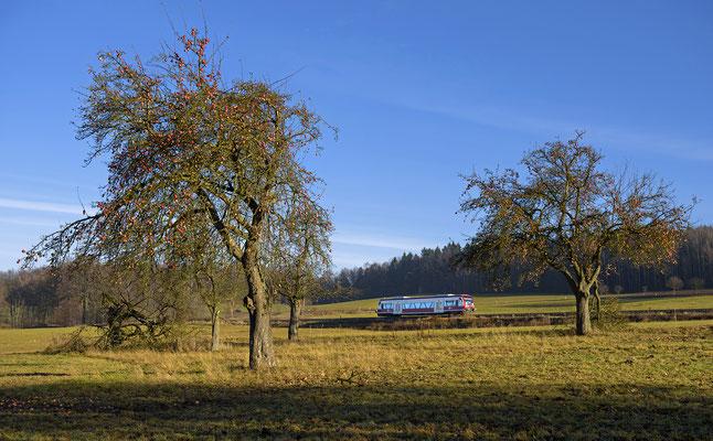 Auf der Rückfahrt nach Neustadt suchte ich mir diese zwei Bäume mit reifen Äpfeln zur Einrahmung. Krumhermsdorf, Ende November 2016.
