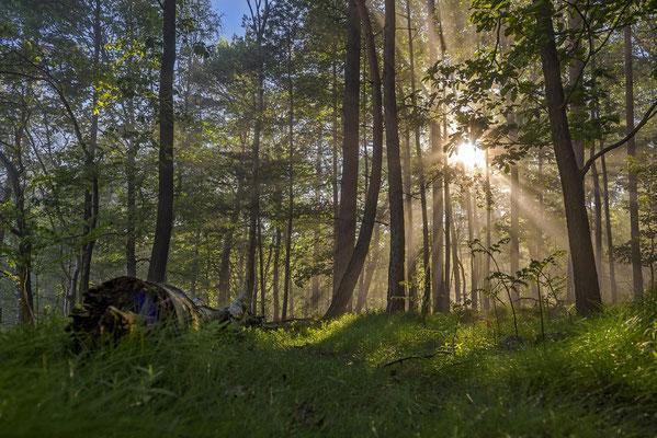 Sonnenaufgang an den Elbleiten. ISO 200, 24mm, f/7.1, 1/200sek.