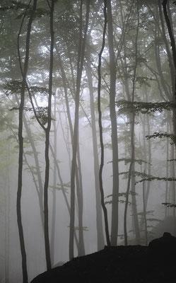Im Nebelwald unterhalb des Liliensteins. ISO 100, 70mm, f/2.8, 1/125sek.