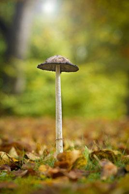 Pilze gehören zum Herbst einfach dazu - auch als Fotomotiv. ISO 50, 180mm, f/8.0, 1/13sek.