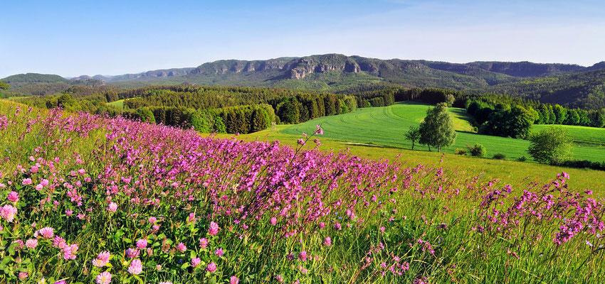 Frühlingsfarben bei Altendorf. Panorama aus 3 Aufnahmen.