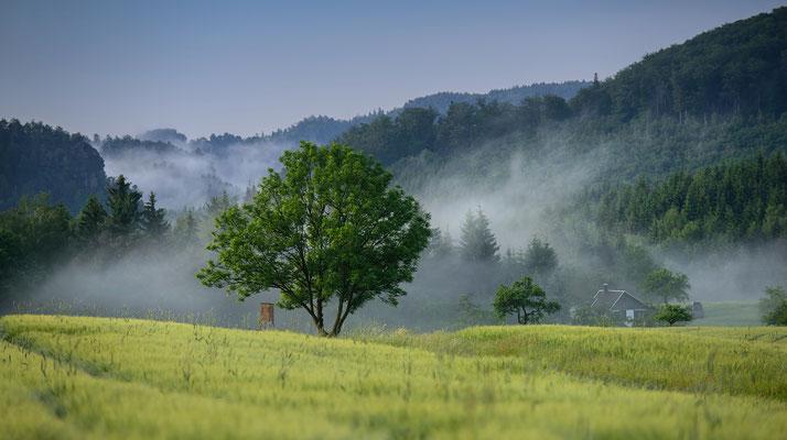 Morgenstimmung am Lichtenhainer Panoramaweg. ISO 50, 170mm, f/4.0, 1/160sek.