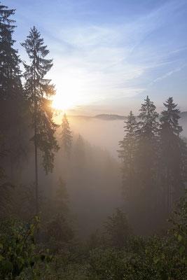 Morgenstimmung am Lichtenhainer Panoramaweg. ISO 50, 24mm, f/11.0, 1/40sek.