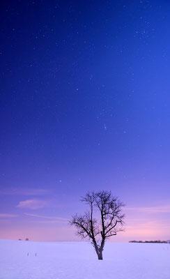 Auf den Feldern zwischen Hohnstein und Ehrenberg suchten wir uns ein paar schöne Solitärbäume. Am Himmel das Sternbild Orion. ISO 1600, 24mm, f/2.8, 10 Sek.