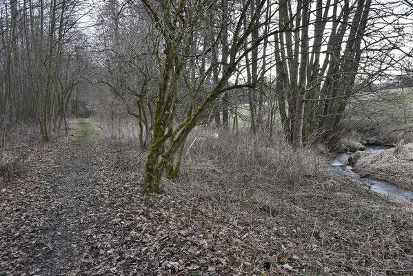 Nun verläuft der Bahndamm parallel zum mäandernden Bächlein. Blickrichtung Lohsdorf, 04.03.19