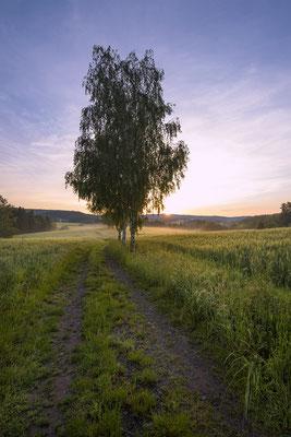 Morgenstimmung am Lichtenhainer Panoramaweg. ISO 50, 15mm, f/16.0, 1/10sek. (Haida Grauverlauf).