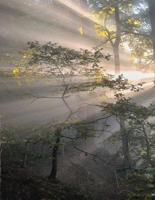 Eindrucksvoller Sonnenaufgang im Wald unterhalb des Liliensteins. ISO 100, 50mm, f/4.0, 1/50sek. (Polfilter).