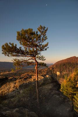 Goldener Herbst an der Großsteinkanzel. ISO 50, 24mm, f/5.6, 1/60sek. (Polfilter).