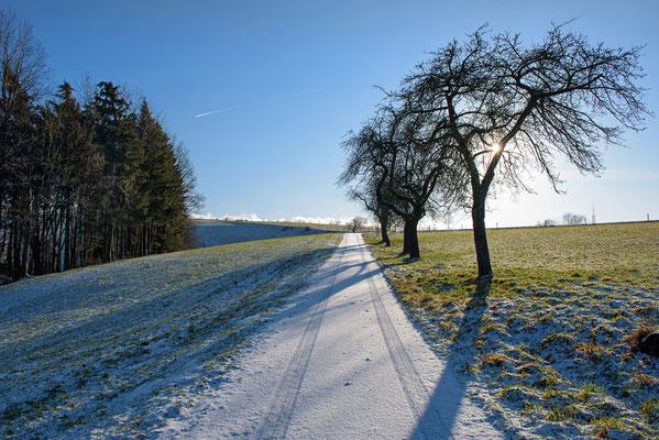 Auf dem Mühlenweg aus dem Sebnitztal hinauf in Richtung Altendorf. ISO 50, 24mm, f/11.0, 1/125sek.