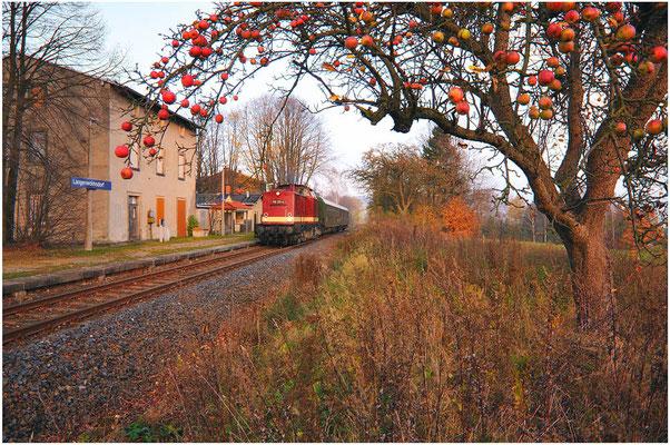 Im letzten Licht des Tages geht es Richtung Pirna. Hier durcheilt der Zug den Haltepunkt Langenwolmsdorf, eíngerahmt von einem Apfelbaum und verschwindet schließlich im Sonnenuntergang... Schön wars! 05.11.11