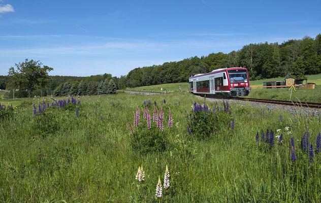 Nach ewig langer Zwangspause wegen Personalmangels bei der Städtebahn und der Brückenrekonstruktion in Polenz rollt nun endlich wieder ein Zug von Neustadt nach Sebnitz, hier vorbei an blühenden Wiesen bei Krumhermsdorf, Mai 2019