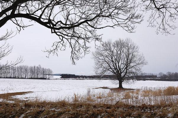 Wahrscheinlich ( noch nicht bekannt ) zwischen Neustadt und Dürrröhrsdorf gelang dem Fotografen diese Aufnahme des Zuges auf freier Strecke. 26.02.2006, Foto: Jan-Henrik Sellin