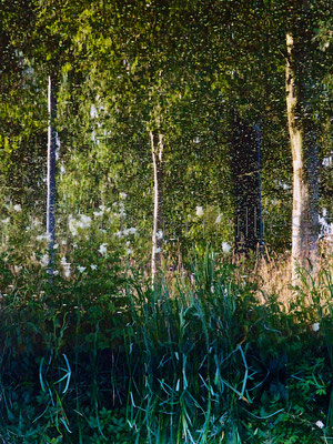 Lichtung #3 bei Worpswede, im Sommer 2014