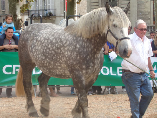 Trait Percheron