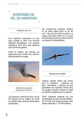stratégie de vols de migration