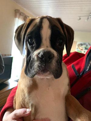 12 Wochen alt