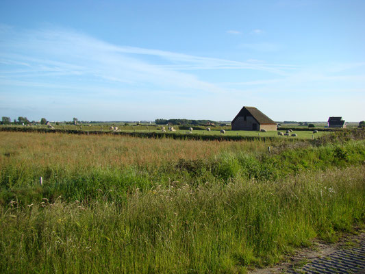 Typical texel landscape © Marlon Paul Bruin 2010