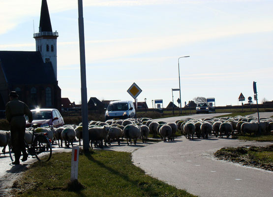 Sheep on the road near Den Hoorn © Marlon Paul Bruin 2009