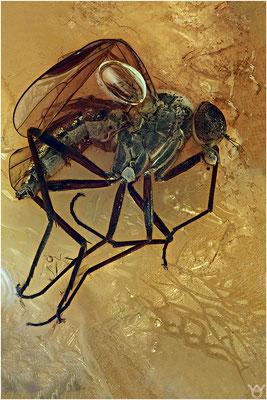 405. Rhagionidae, Schnepfenfliege, Baltic Amber