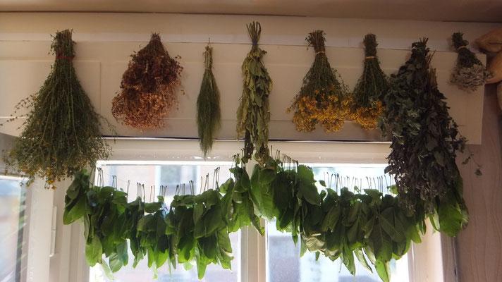 Kräuterfenster