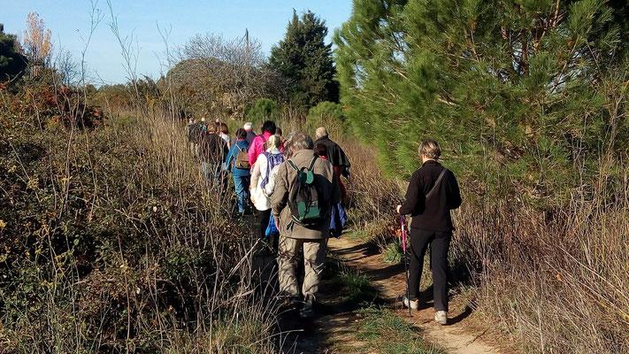Perpignan - Le bois des chênes - 21 novembre 2017