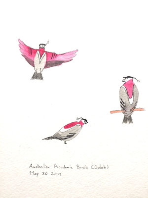 Australian Academic Birds (Galah) May 30 2017