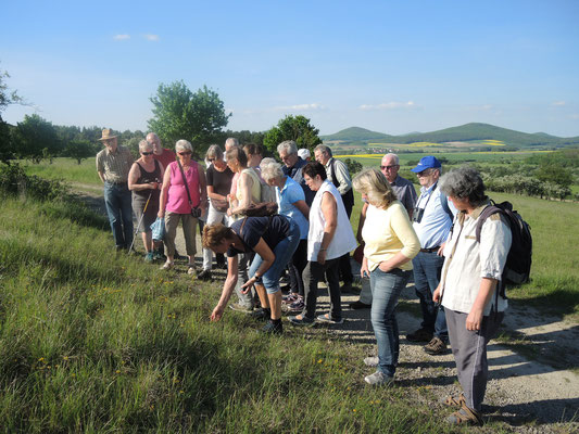 ^NABU und Rhönklub Hünfeld, Orchideenwanderung, am 17.05.2017