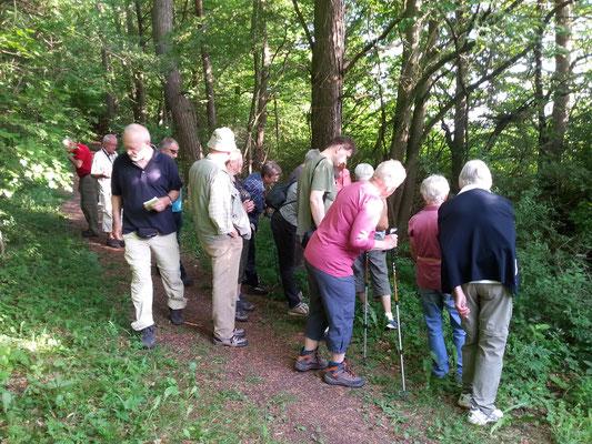 NABU Orchideenwanderung am Zinkberg, am 31.05.2017