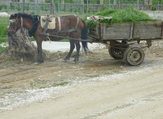 Ça laisse ce cheval totalement indifférent