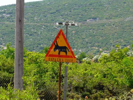 Attention aux ânes.