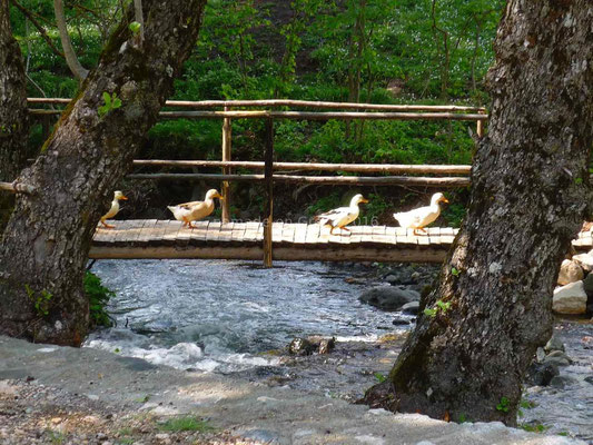 Avec un pont sur lequel passent les canards