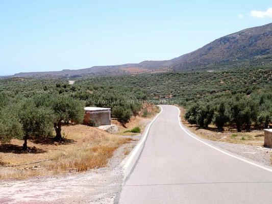 Les champs d'oliviers s'étendent à perte de vue
