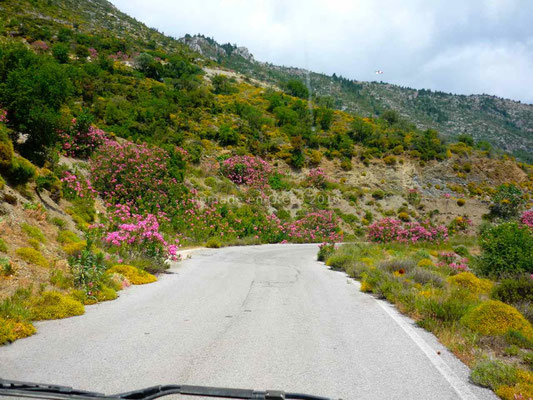 Route fleurie