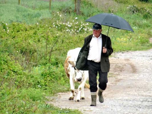 On voit souvent des personnes emmenant paître leur unique vache.