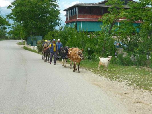 Les usagers de la route sont variés: chèvres, vaches, hommes et chevaux.