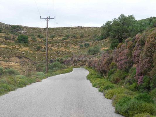La végétation rétrécit la route.