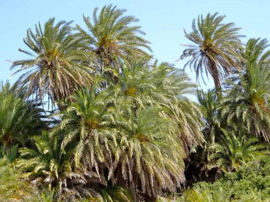 La palmeraie naturelle