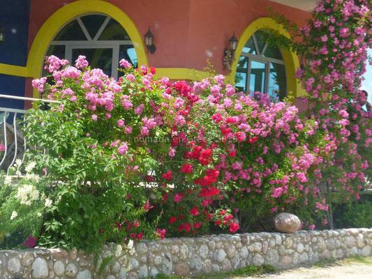 Une maison bien fleurie.