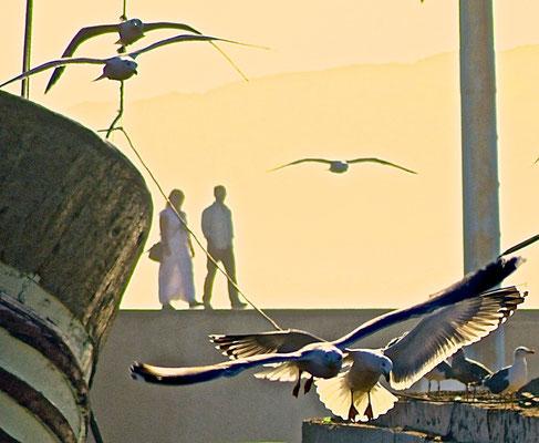 Essaouira - Coppie - Foto di Alessandro Giacoletto