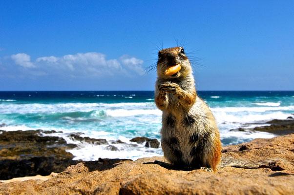 Fuerte Ventura - scoiattolo oceanico - Foto di Alessandro Giacoletto