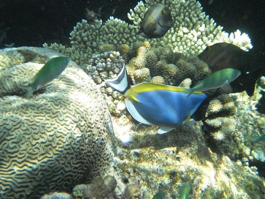 Maldive sub - Foto di Alessandro Giacoletto