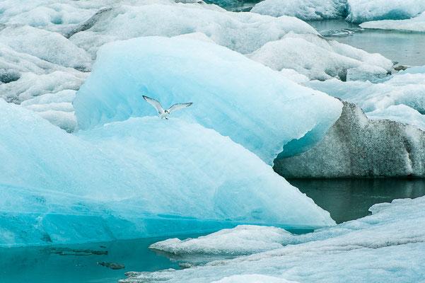 Islanda - Laguna degli Iceberg