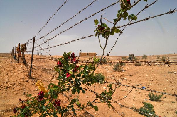 Giordania - forte nel deserto - Foto di Alessandro Giacoletto