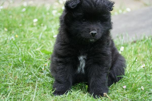 5 Wochen alt