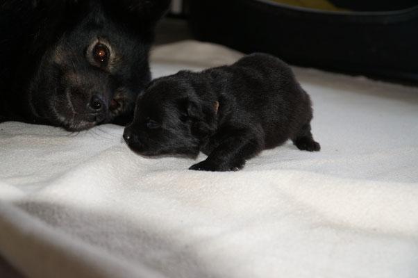 2 Wochen alt, mit Aika