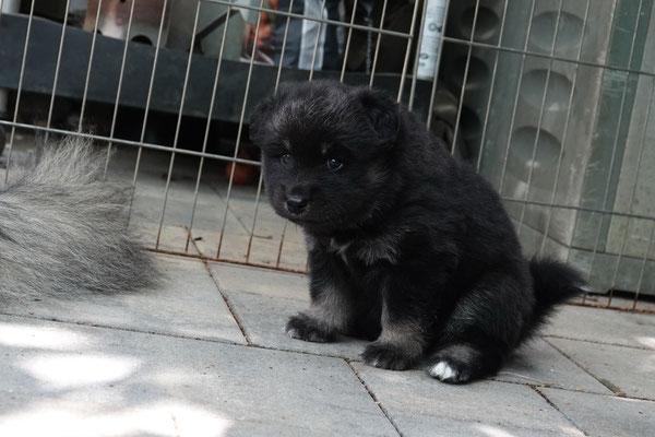 vier Wochen alt