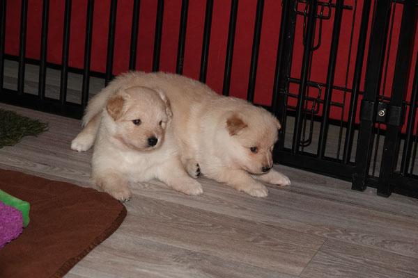 drei Wochen alt, Fallou und Fia
