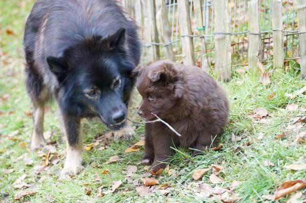 7 Wochen alt, Aika und Baili